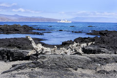 Paesaggio delle isole di Galapagos Fotografia Stock Libera da Diritti