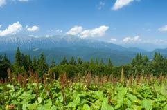 Paesaggio delle montagne in Carpathians Immagini Stock Libere da Diritti