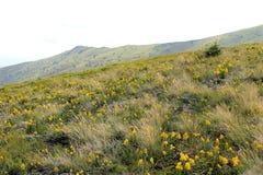 Paesaggio delle montagne carpatiche Fotografia Stock