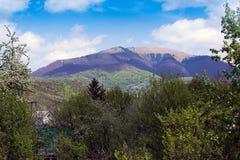 Paesaggio delle montagne con gli alberi Fotografia Stock