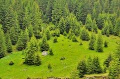 Paesaggio delle montagne con gli alberi di pinea Immagine Stock Libera da Diritti