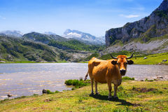 Paesaggio delle montagne con il lago e la mucca Fotografie Stock Libere da Diritti