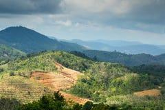 Paesaggio delle montagne con le piantagioni di tè Immagini Stock