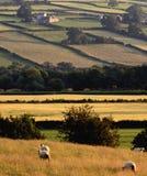 Paesaggio delle montagne delle colline della campagna di paesaggio Immagini Stock Libere da Diritti