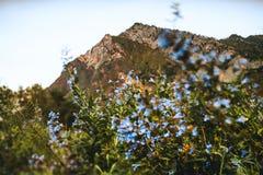 Paesaggio delle montagne di Altai con i fiori blu sul prato Immagini Stock