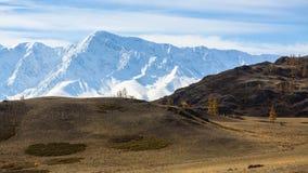 Paesaggio delle montagne di Altai Repubblica di Altai Fotografia Stock Libera da Diritti
