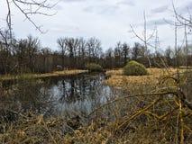Paesaggio delle paludi della foresta e degli alberi asciutti in tempo piovoso Fotografia Stock