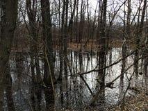Paesaggio delle paludi della foresta e degli alberi asciutti in tempo piovoso Immagini Stock