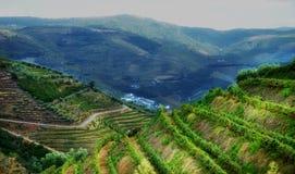 Paesaggio delle vigne della valle del Portogallo il Duero Immagini Stock