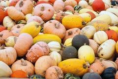 Paesaggio delle zucche delle zucche Immagini Stock Libere da Diritti