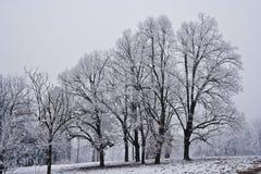 Paesaggio dello Snowy Fotografia Stock Libera da Diritti