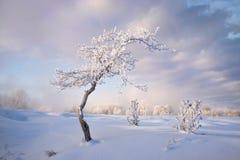 Paesaggio dello Snowy con gli alberi Immagini Stock