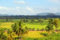 Paesaggio dello Sri Lanka Fotografia Stock