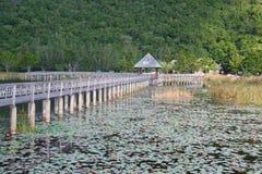 Paesaggio dello stagno di Lotus Fotografia Stock