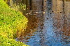 Paesaggio dello stagno nel parco fotografie stock libere da diritti