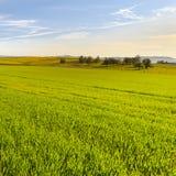 Paesaggio dello svizzero con i prati Fotografia Stock