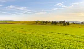 Paesaggio dello svizzero con i prati Immagine Stock