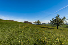 Paesaggio dello svizzero con i prati Immagine Stock Libera da Diritti
