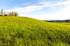 Paesaggio dello svizzero con le foreste ed il prato Fotografie Stock Libere da Diritti
