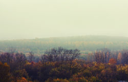 Paesaggio depressivo della foresta di autunno Fotografie Stock