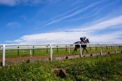 Paesaggio di addestramento del cavallo da corsa Fotografie Stock