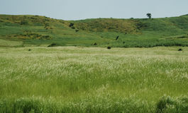 Paesaggio di agricoltura con i campi del tef alla mattina, Etiopia Fotografie Stock Libere da Diritti