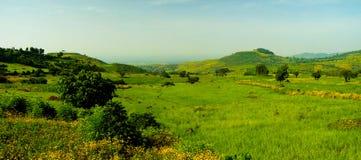 Paesaggio di agricoltura con i campi del tef alla mattina, Etiopia Fotografia Stock Libera da Diritti