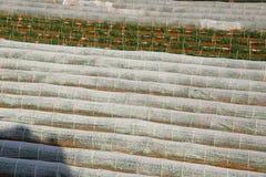 Paesaggio di agricoltura del giacimento della patata Fotografia Stock Libera da Diritti