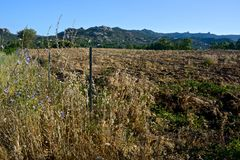 Paesaggio di agricoltura della campagna Immagini Stock