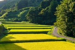Paesaggio di agricoltura della campagna giapponese Fotografia Stock Libera da Diritti