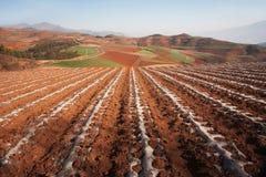 Paesaggio di agricoltura della sabbia di Brown con le montagne Fotografia Stock