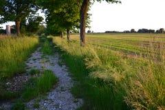 Paesaggio di agricoltura di estate Fotografia Stock