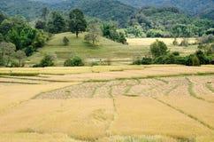 Paesaggio di agricoltura dopo la raccolta in Tailandia del Nord Immagine Stock Libera da Diritti
