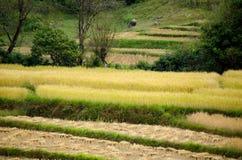 Paesaggio di agricoltura dopo la raccolta in Tailandia del Nord Fotografia Stock Libera da Diritti
