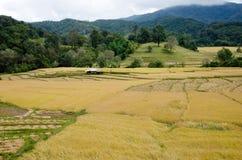 Paesaggio di agricoltura dopo la raccolta in Tailandia del Nord Fotografia Stock
