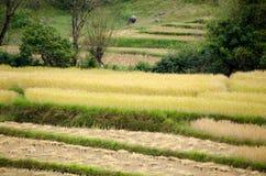 Paesaggio di agricoltura dopo la raccolta in Tailandia del Nord Fotografie Stock