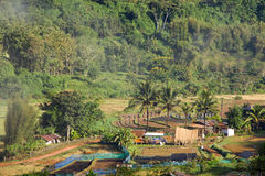 Paesaggio di agricoltura in Tailandia Immagini Stock