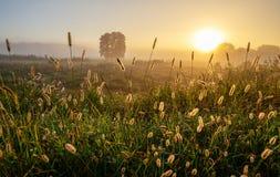 Paesaggio di alba della primavera Immagine Stock