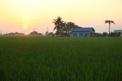 Paesaggio di alba della risaia Fotografia Stock