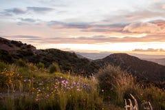Paesaggio di alba di tramonto con le nuvole variopinte ed i fiori selvaggi Fotografia Stock Libera da Diritti
