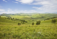 Paesaggio di Altai della montagna Glade verde Immagine Stock