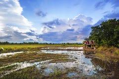 Paesaggio di area agricola della preparazione di agricoltura Fotografia Stock Libera da Diritti
