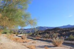 Paesaggio di area del deserto Fotografia Stock