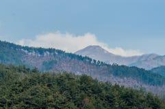 Paesaggio di area montagnosa con gli alberi sempreverdi Fotografia Stock Libera da Diritti