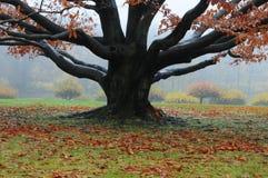 Paesaggio di Autum con nebbia Fotografia Stock Libera da Diritti