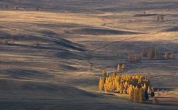 Paesaggio di Autumn Mongolian: steppa ad alta altitudine con i piccoli boschetti del larice, illuminati dal sole Strade nella ste Fotografia Stock