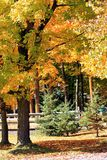paesaggio di autunno Immagini Stock