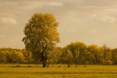 Paesaggio di autunno Immagine Stock
