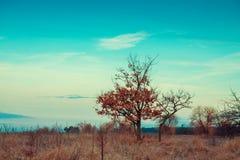 Paesaggio di autunno, alberi nel campo Fotografie Stock