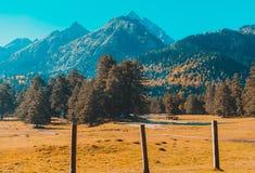 Paesaggio di autunno, alberi sui precedenti delle montagne, montagne, natura fotografie stock